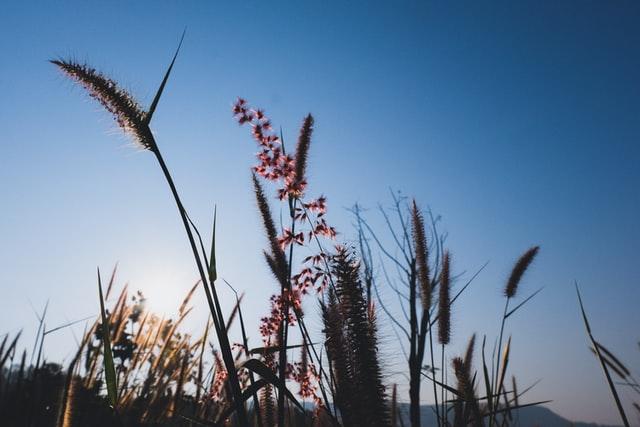 « Insuffler le développement durable à l'hôpital : repenser un roseau pansant » | Rudy Chouvel